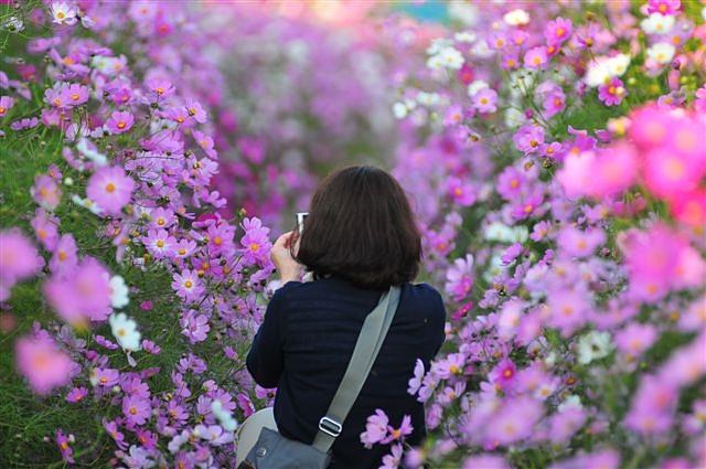 花園の華 ~カメラ女子~ (2)