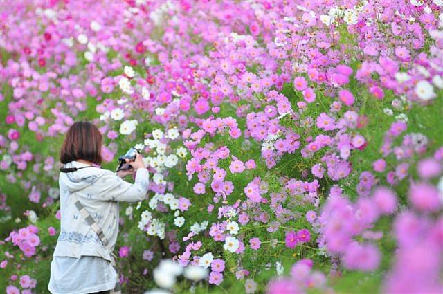 花園の華 ~カメラ女子~ (4)