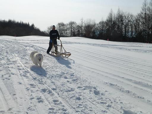 2013 きぬがわ高原1月橇練16
