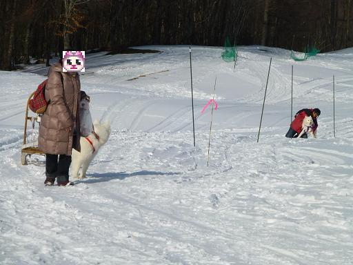 2013 きぬがわ高原1月橇練17