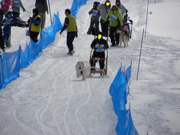 2013 2月10日きぬがわ高原犬橇大会 012