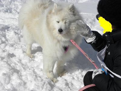 2013 2月10日きぬがわ高原犬橇大会 017