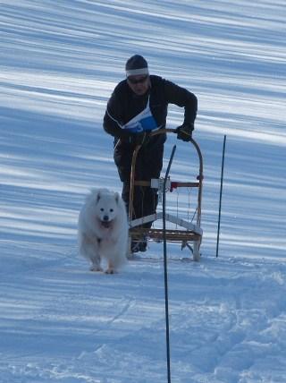 2013犬ぞり大会10