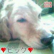 B3image_20101215091325.jpg