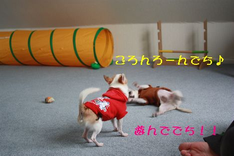 IMG_2112.jpg