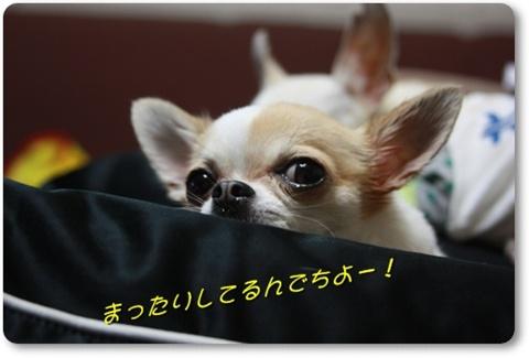 IMG_2453_20100429204631.jpg