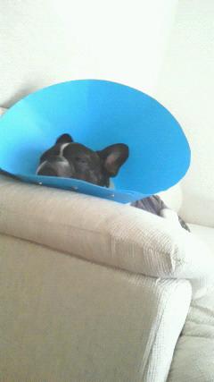 肘掛けのとこが丁度いい枕がわりに。