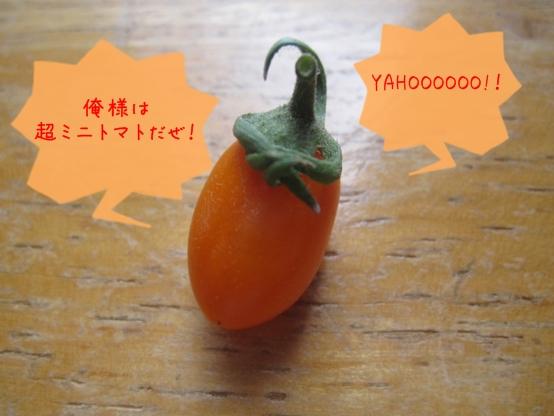 俺様は超ミニトマト