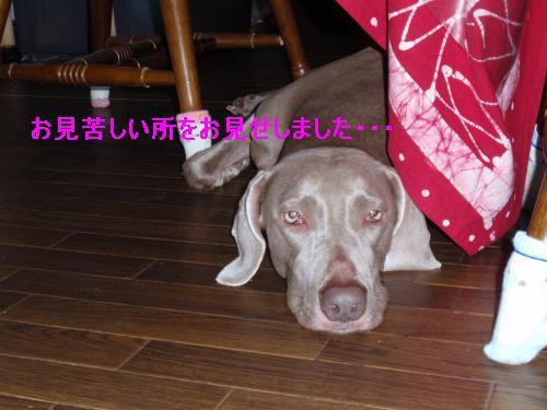 PICT0010_convert_20110801225810.jpg