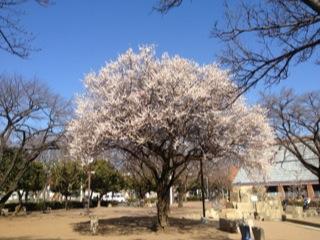 写真 2013-03-18 22 59 02