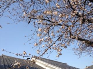 写真 2013-03-19 23 40 10