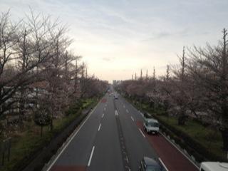 写真 2013-03-23 0 37 10
