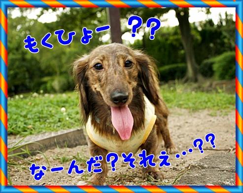 _MG_4365_20110731065016.jpg