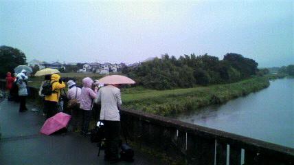 巨瀬川鎮西橋・雨です… - 日々