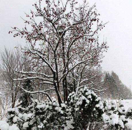 2012年11月30日撮影.北海道にて...