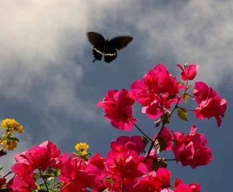 花とシロオビアゲハ