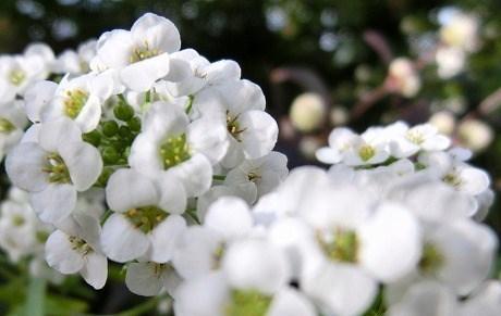 2012年12月20日撮影.庭の花...