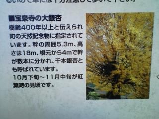 21_20101123204417.jpg