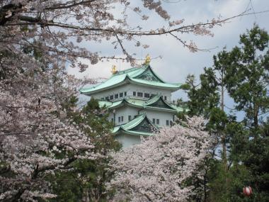 名古屋城桜①