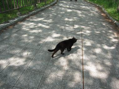 クロねこも回廊歩き