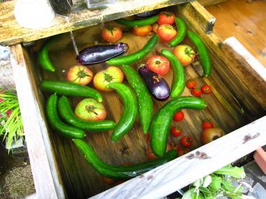 冷やされた夏野菜
