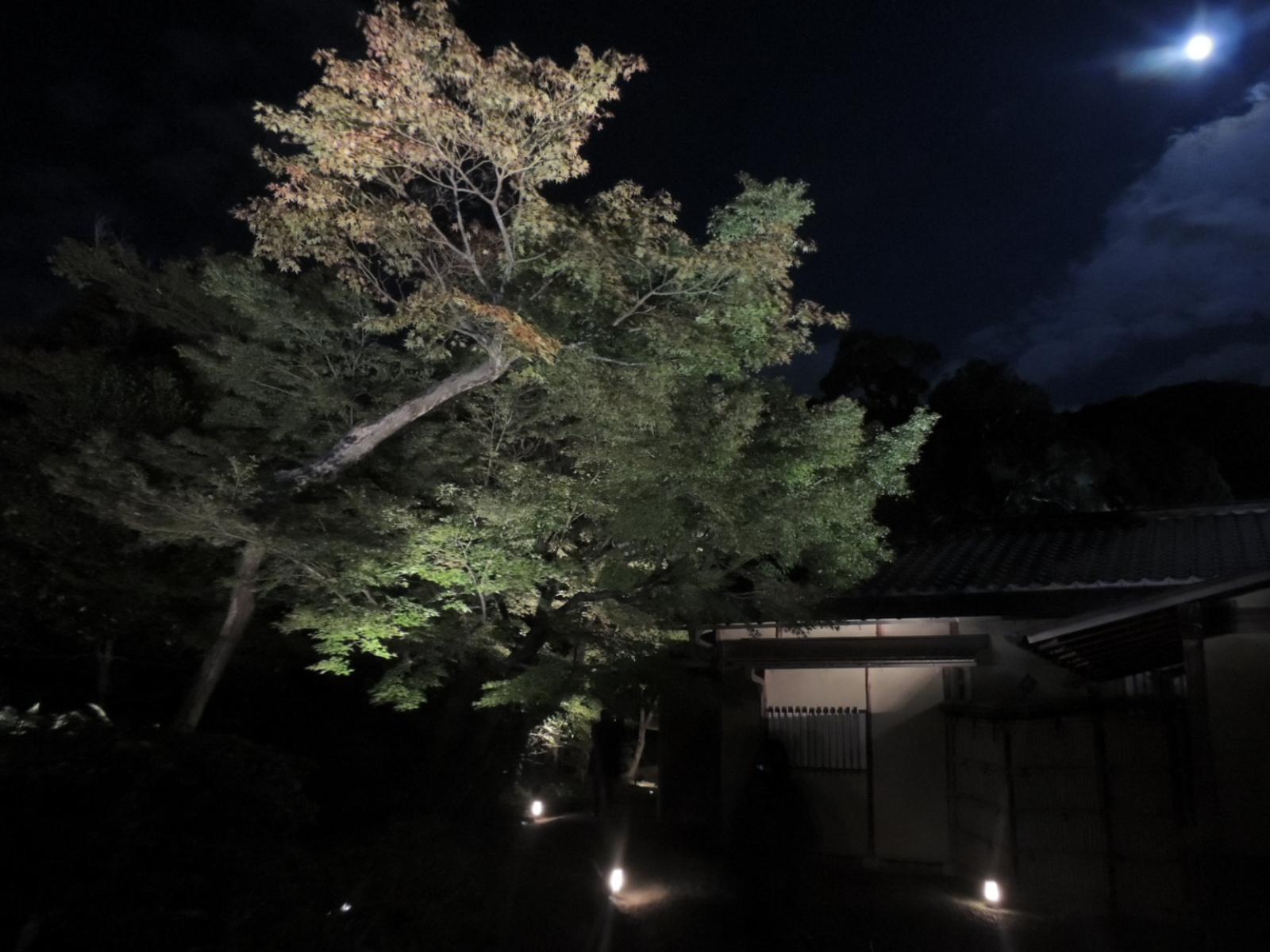 高台寺ライトアップ (7)