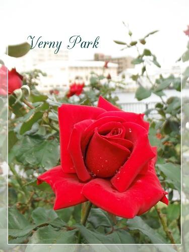 F20111023ヴェルニー公園01