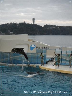 F20111112新江ノ島水族館06