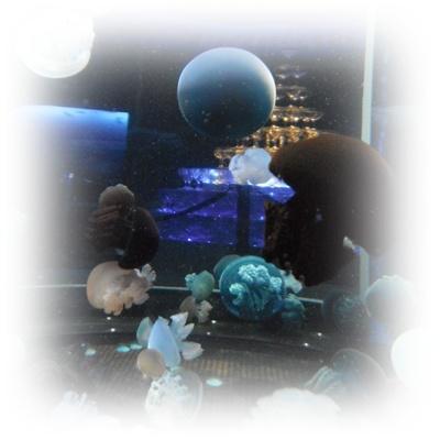 F20111112新江ノ島水族館03