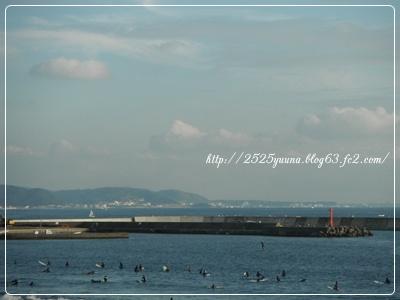 F20111112新江ノ島水族館08