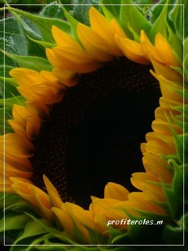 b-002_20110721213643.jpg
