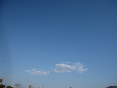 IMG_6656空