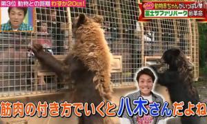 熊に似ている八木真澄(サバンナ)