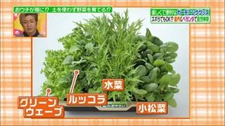 水菜やルッコラ、グリーンウエーブ、小松菜