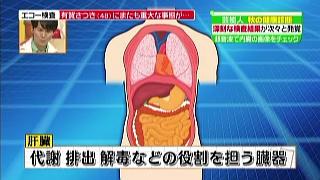 代謝、排出、解毒などの役割を担う臓器