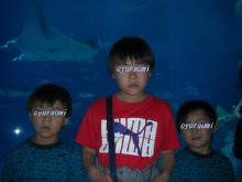 cyuraumi2.jpg