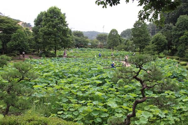 2011_08_01 薬師池公園DPP_0006
