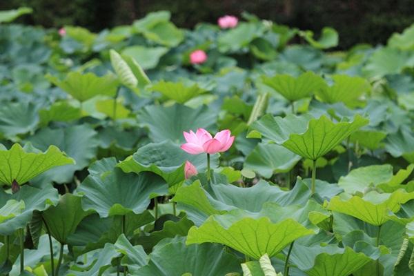2011_08_01 薬師池公園DPP_0008