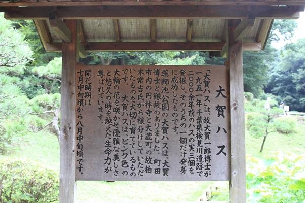 2011_08_01 薬師池公園DPP_0070