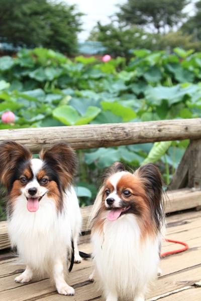 2011_08_01 薬師池公園DPP_0023