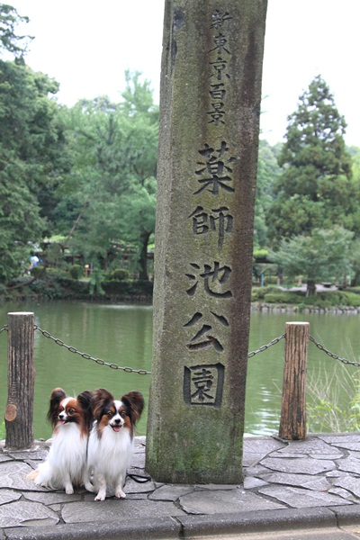 2011_08_01 薬師池公園DPP_0003