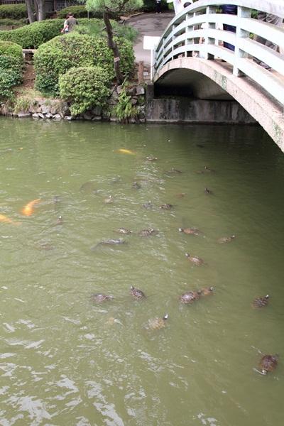 2011_08_01 薬師池公園DPP_0055
