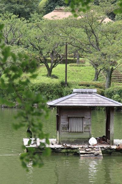 2011_08_01 薬師池公園DPP_0060