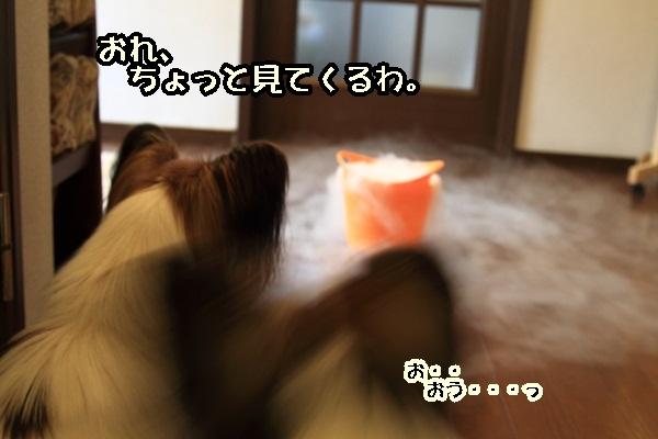 2011_08_02 ドライアイスDPP_0022