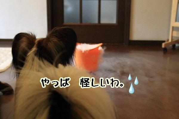 2011_08_02 ドライアイスDPP_0024