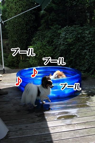 2011_08_06 プールDPP_0004