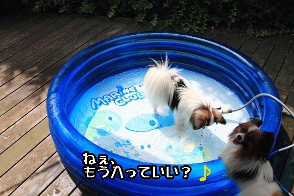 2011_08_06 プールDPP_0001