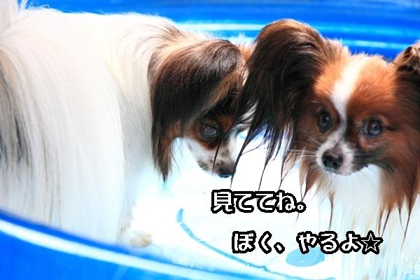 2011_08_06 プールDPP_0013