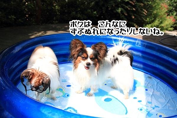 2011_08_06 プールDPP_0020