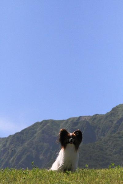 2011_08_13  大山DPP_0016